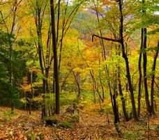 画像に含まれている可能性があるもの:木、植物、空、草、屋外、自然